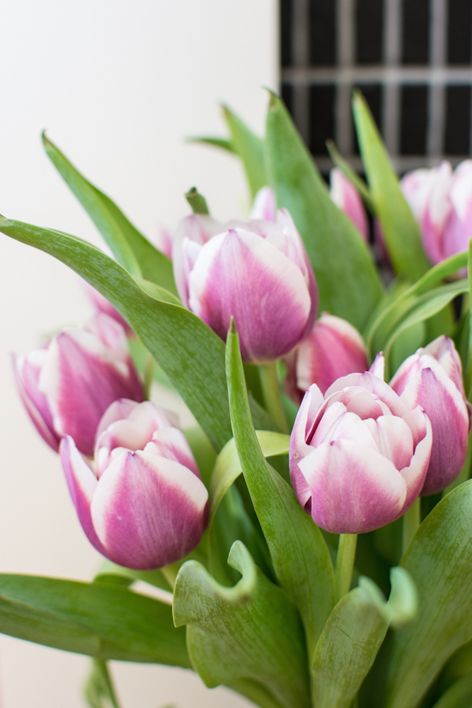 fresh-flowers-spring-tulips-1