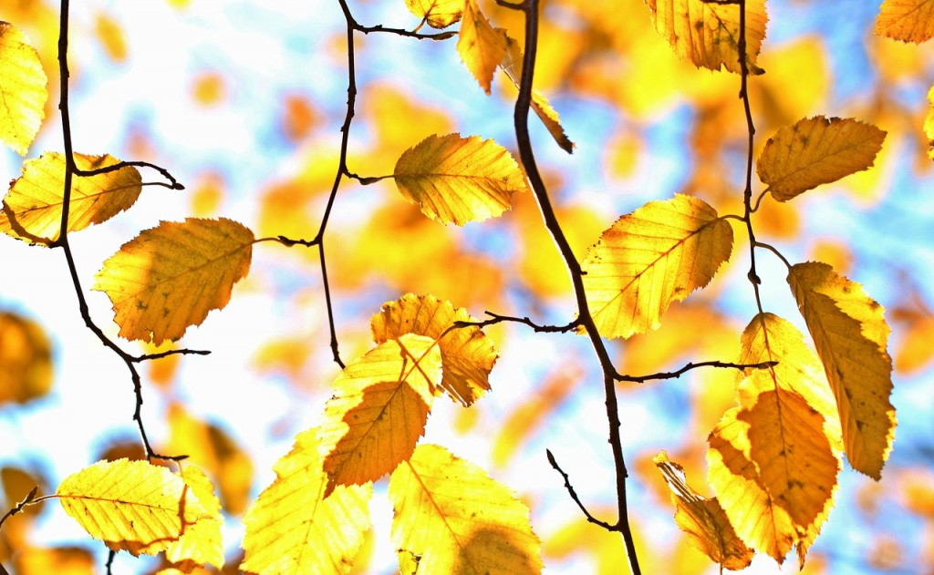 Autumn Gardening: What You Need To Do Before Winter Arrives
