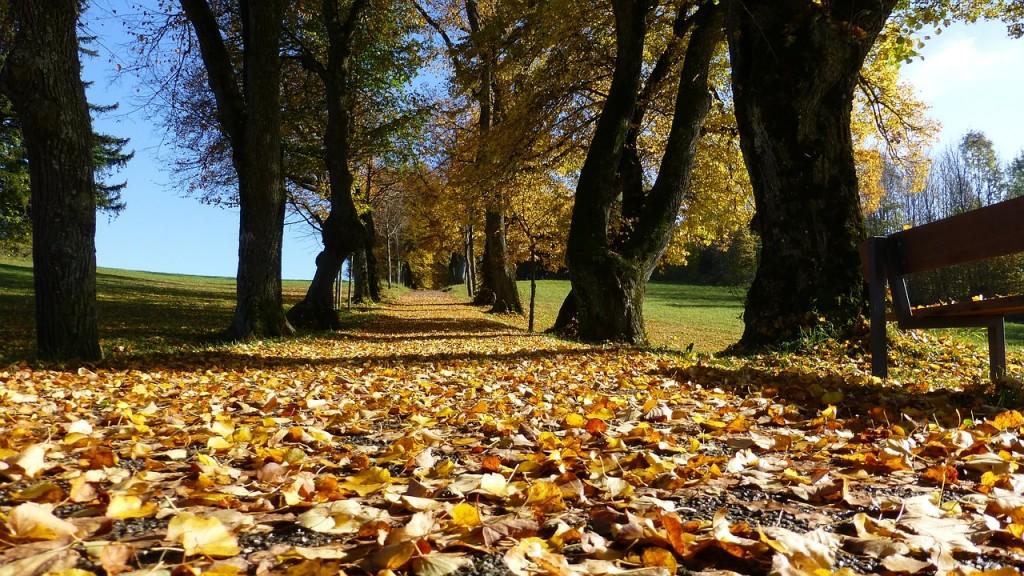 Why Autumn Makes Me Happy