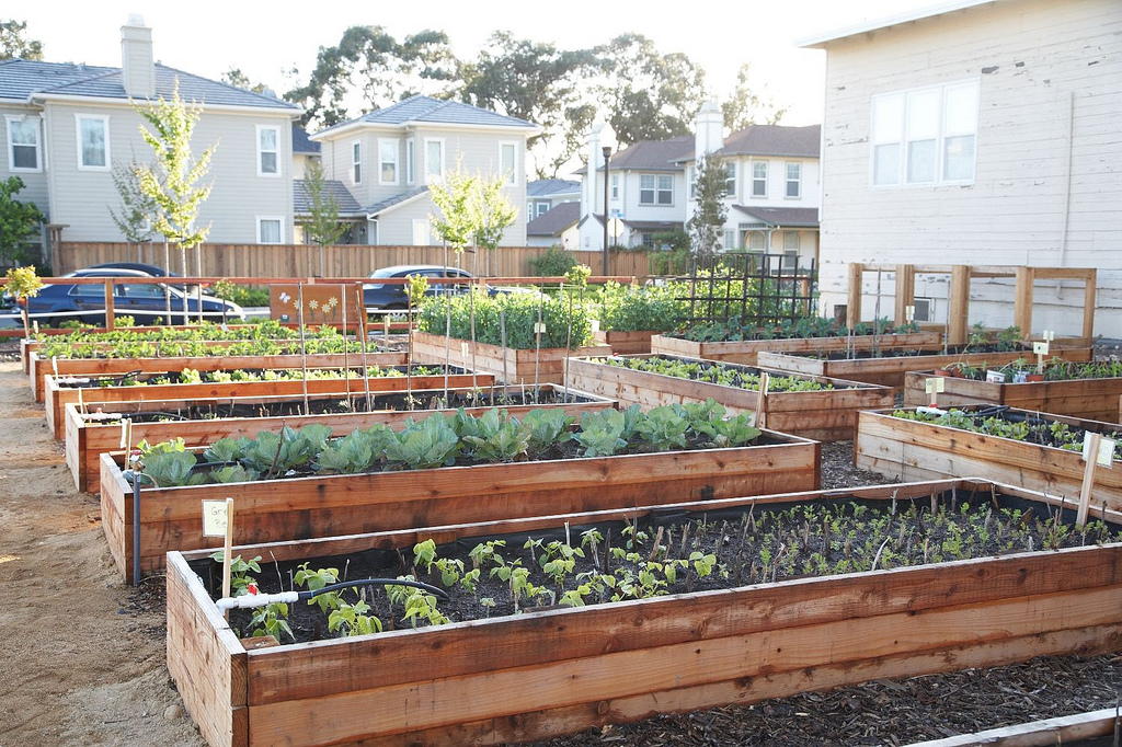 Useful tips to build your own raised garden bed | Guest Post