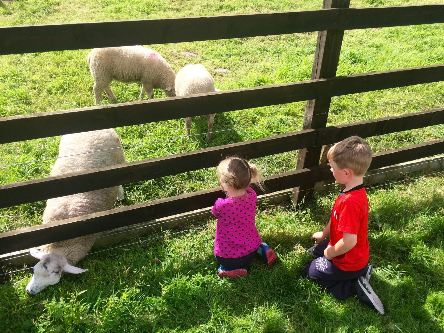 My Top Things For Families In The Lake District