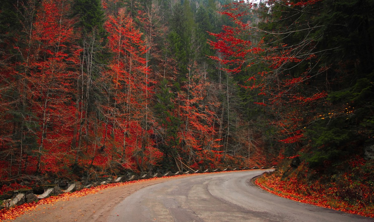 autumn_woods_forest_road_nature_fall_landscape_season-1324095.jpg!d