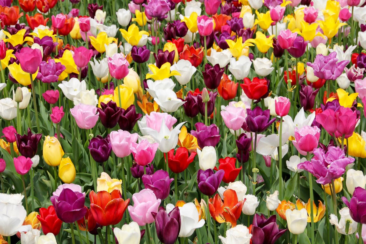 How To Get Your Garden Flower Show Ready Aaublog