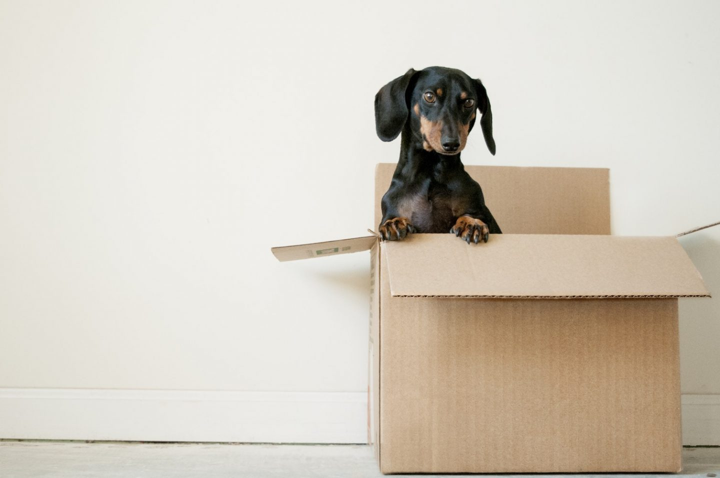 Tips For When You Move House