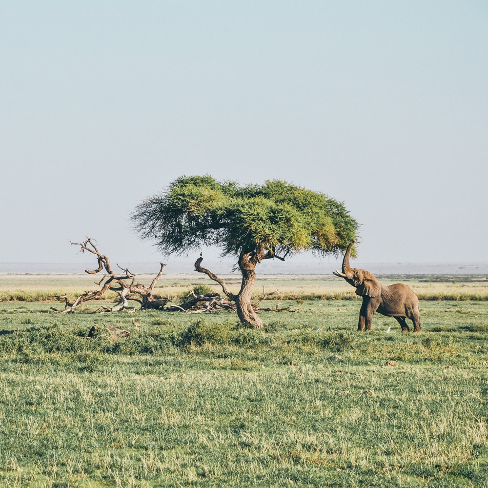 3 of the Best Holiday Destinations for Safari Lovers
