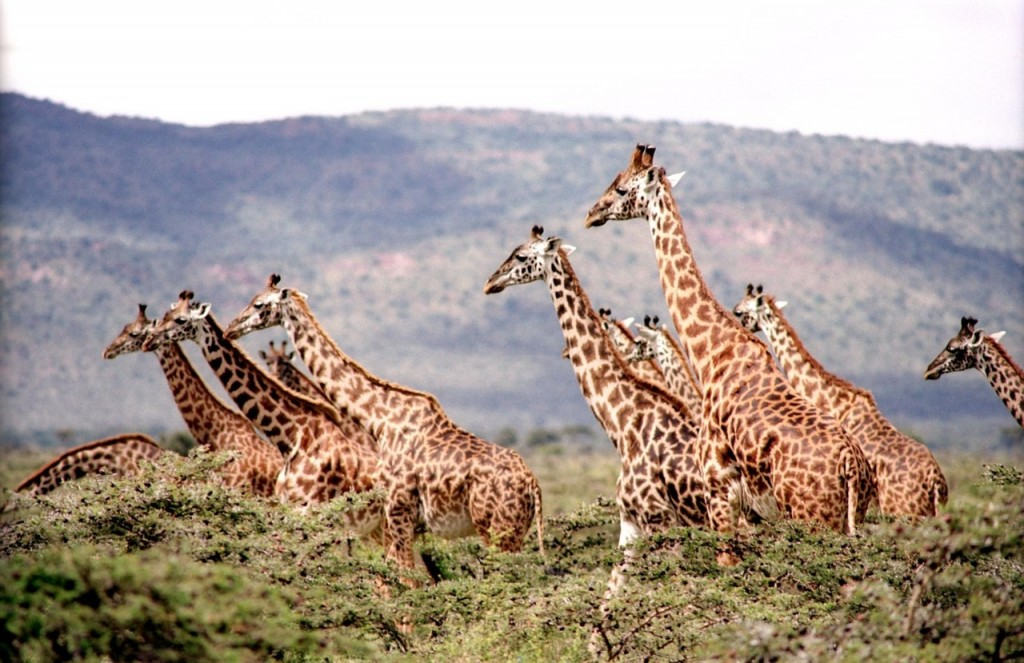 Family Travel: Have You Ever Considered a Safari?