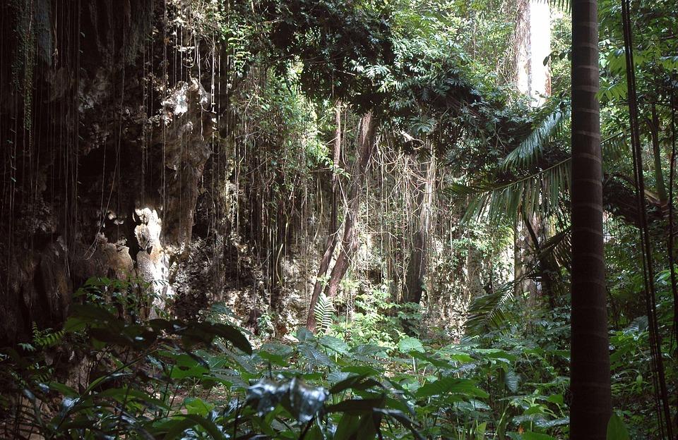 jungle-289137_960_720