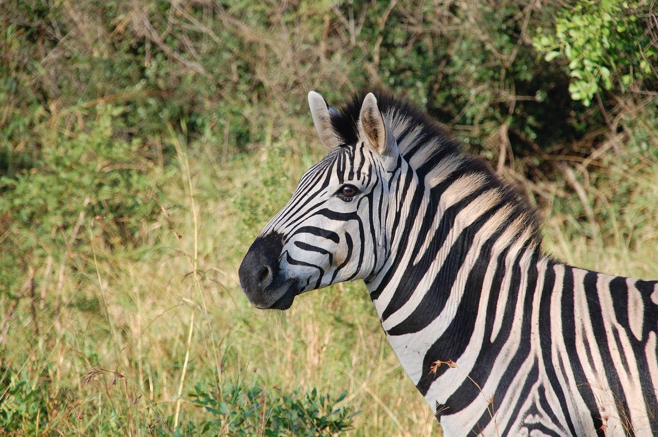 south-africa-163052_1280