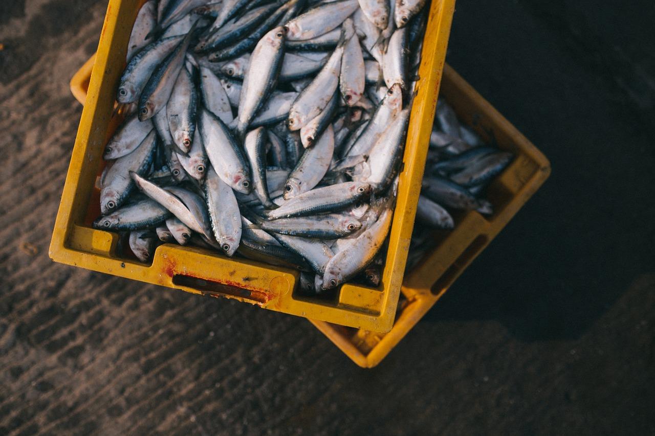 fish-984299_1280