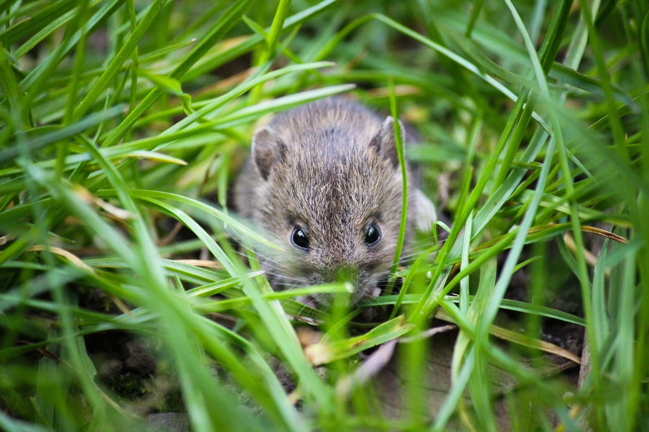 mouse-1335602_1280