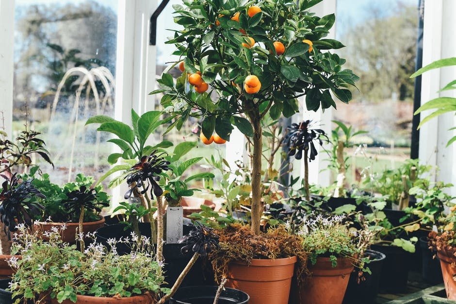 The Urban Gardener