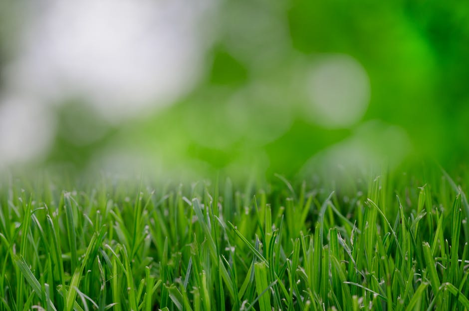nature-garden-grass-lawn
