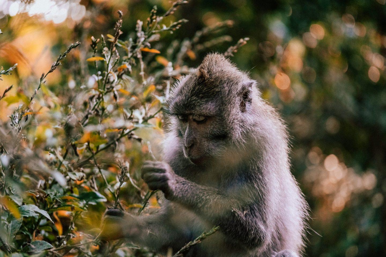 Exploring the Wildlife in Ubud, Bali | Monkey Forest