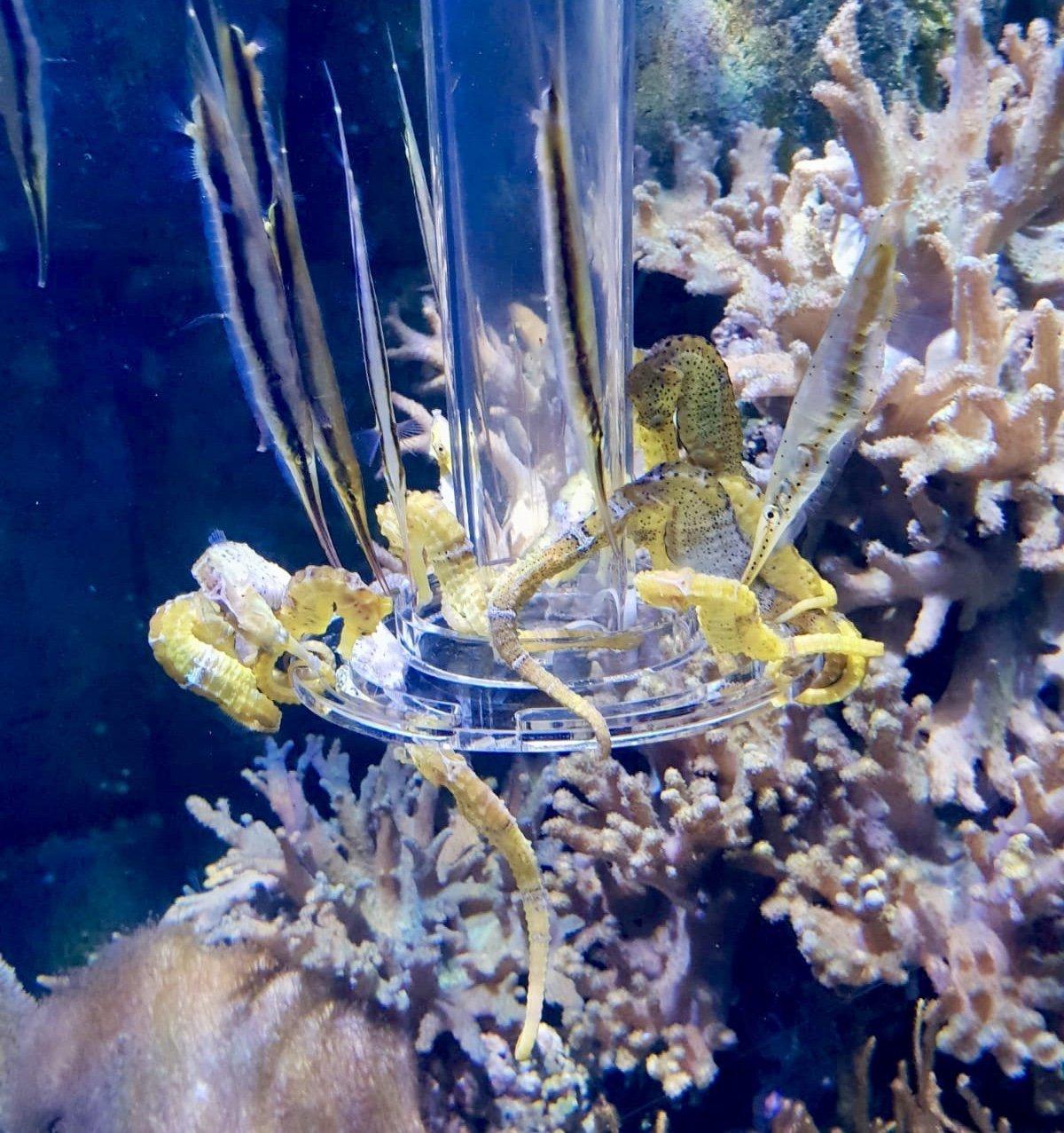 Day Out at SEA LIFE London Aquarium