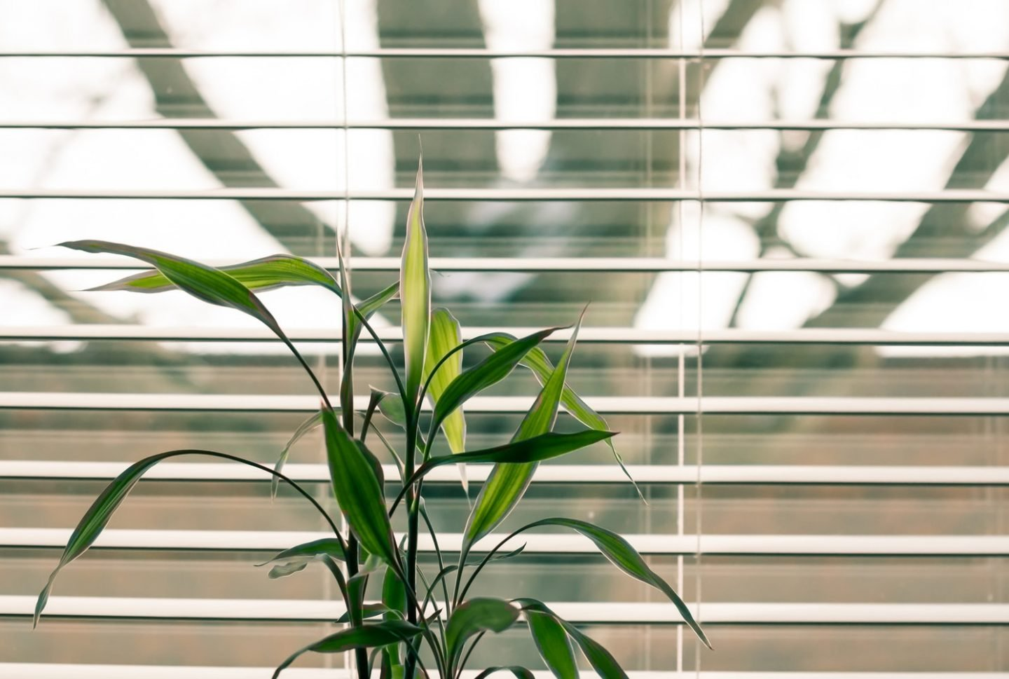 How to Choose the Right Colour of Your Window Blinds