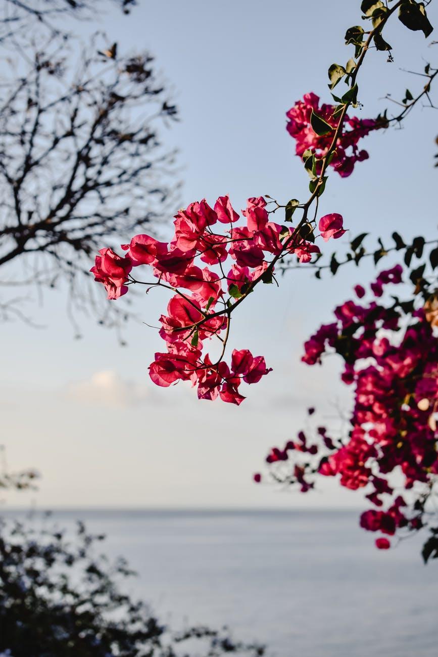 red flowers near body of water
