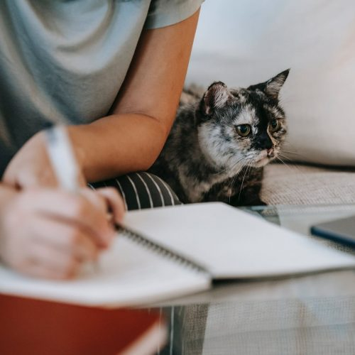 woman writing in organizer near cat on sofa